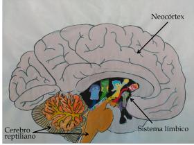 figura_1-_el_cerebro_triuno_2